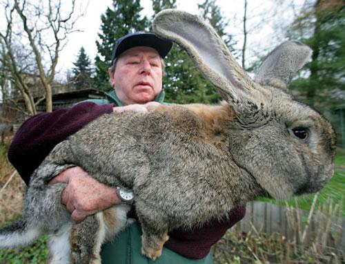 booooooom rabbit giant growing blog vancouver art design photography