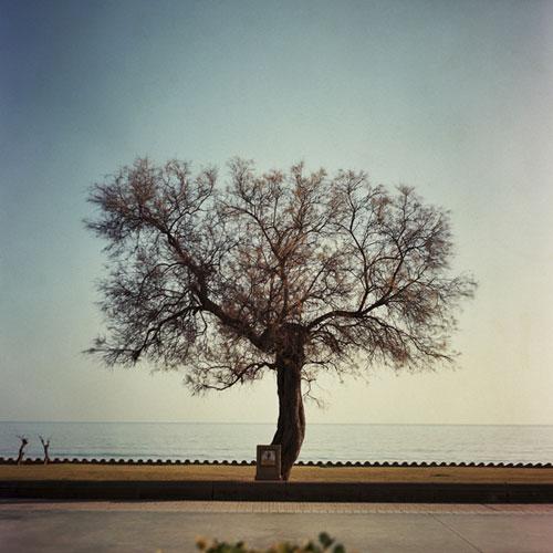 erika svensson photographer photography
