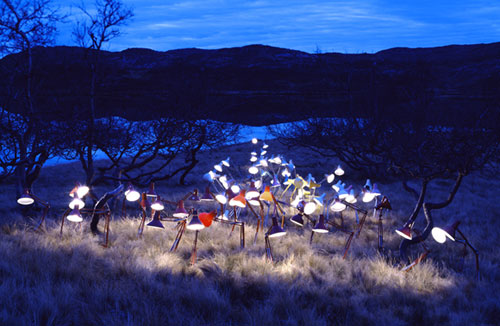 rune guneriussen lamps nature photography