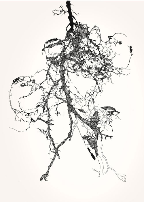 claire scully the quiet revolution painting drawing artist typography