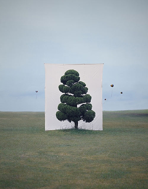 myoung ho lee photographer photography tree backdrop
