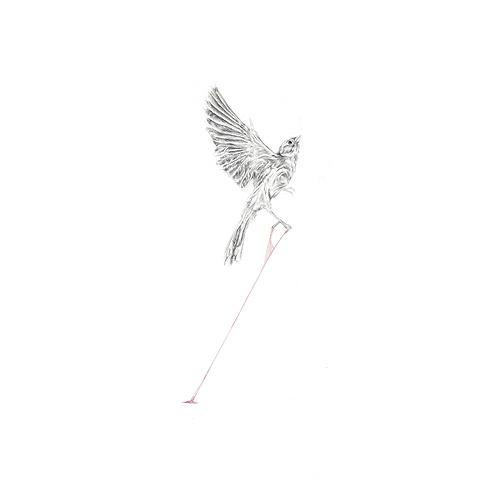 rachel goodyear drawing illustration artist