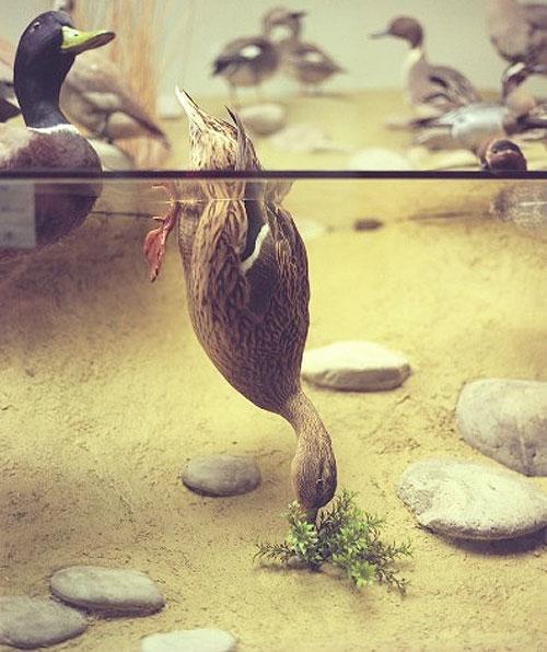 april gertler bird diorama still life photography photographer