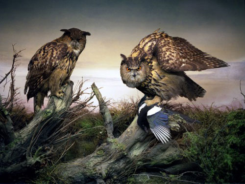 april gertler bird diorama still life photography photographer