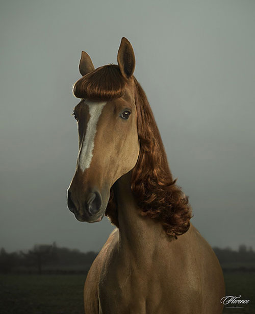 julian wolkenstein horse wearing a wig photographer photography