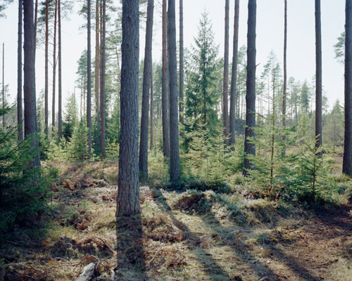 gustav gustafsson photographer photography