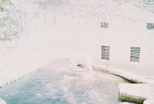 hasisi park seoul south korea photographer photography