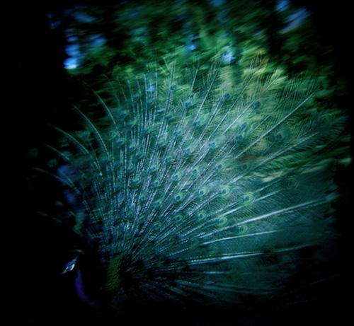 nina buesing photographer photography