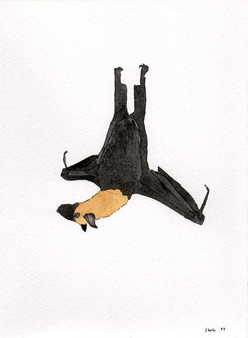 shawn creeden artist drawing bat