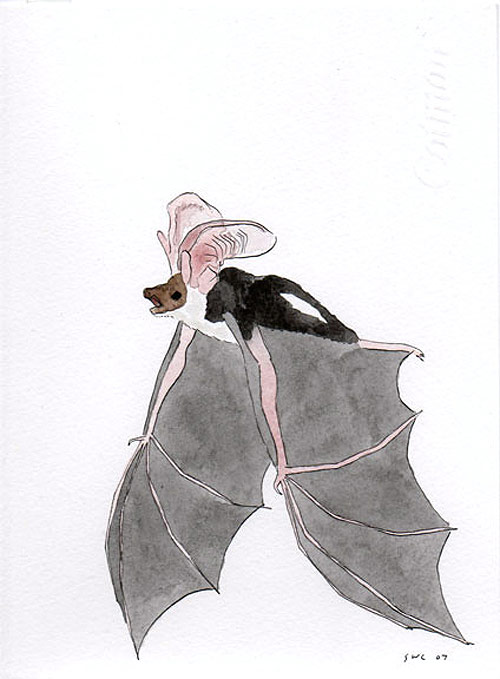 shawn creeden artist drawing bat