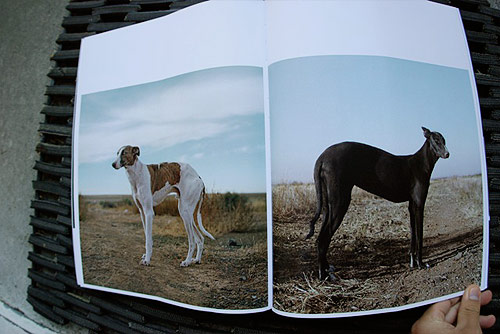 foam magazine photography publication international amsterdam