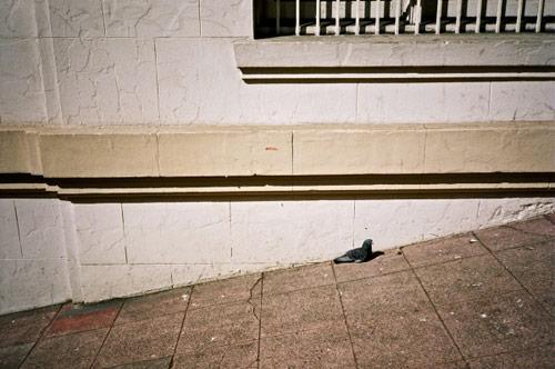 tatum shaw photographer photography