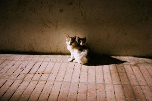 chris taylor photographer photography