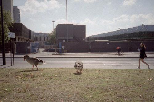 david wilson photographer photography