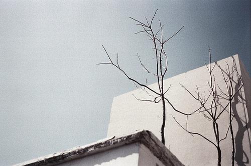 Photographer Achinoam Alon photography tree