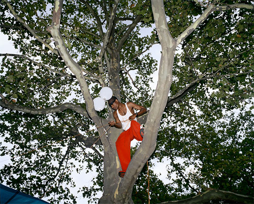 clayton cotterell photographer photography guy in tree