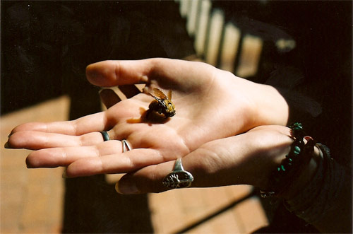 jenna popoli bee hand photography photo