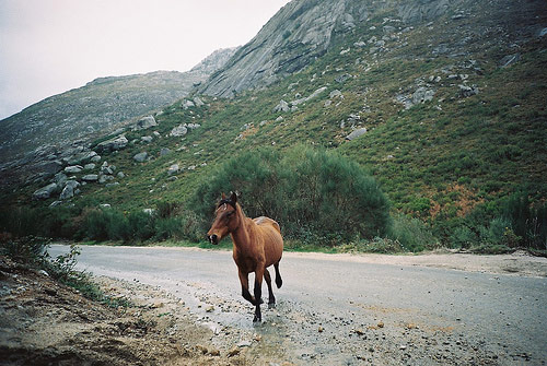 andre santos photographer horse photography