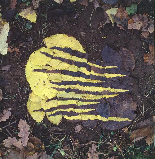 Yellow and dark elm leaf work andy goldsworthy british artist sculptor photographer andy goldsworthy