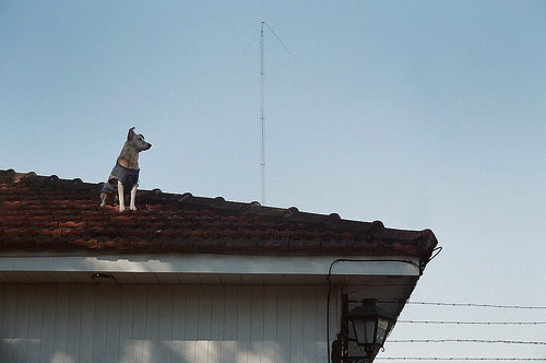 nicolas dodi roof dog photographer photography