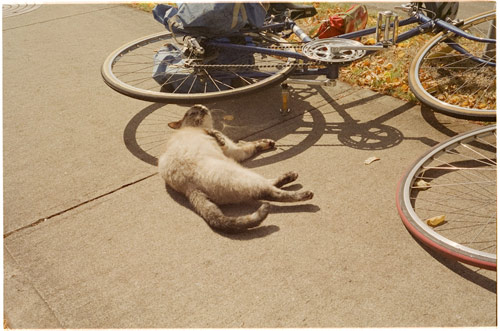 ali bosworth photographer photography victoria british columbia canadian