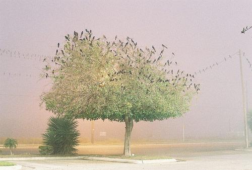 mando alvarez photographer photography