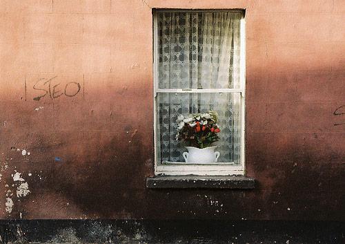 sarah mclean photographer photography