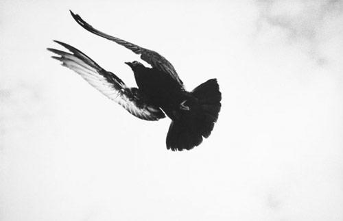 Photographer Alessandro Zuek Simonetti photography