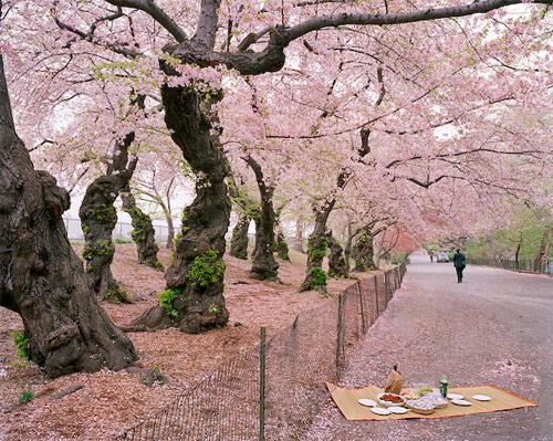 satomi shirai photographer photography
