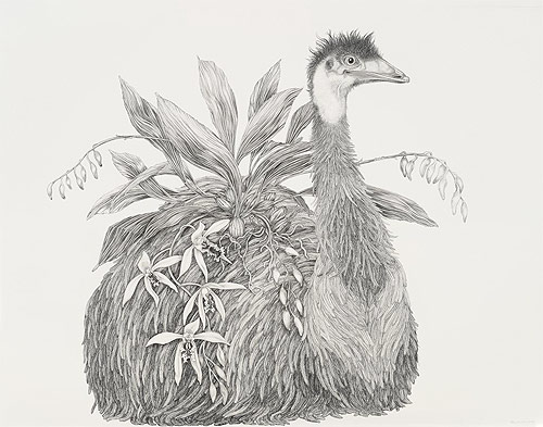 artist tara tucker drawings