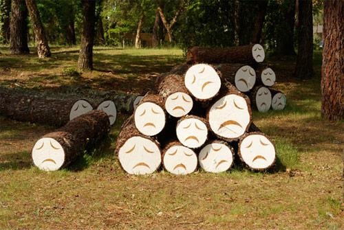 poor little trees by steven burke
