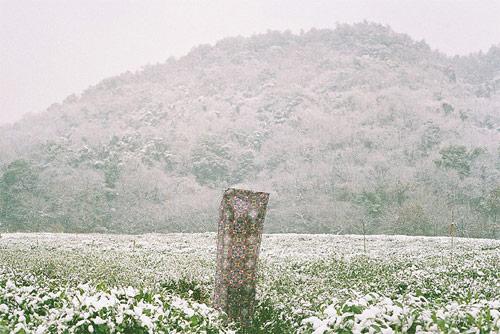 photographer photography li hui