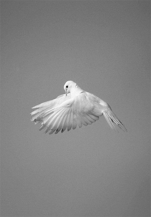 photographer photography marton perlaki