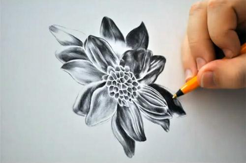 black dahlia pen drawing by paul alexander thornton