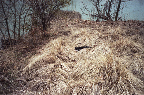 photographer photography ed panar animals that saw me