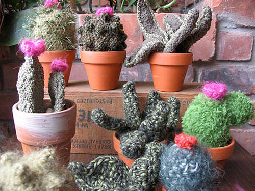 Crochet cactus by Shannon Gerard
