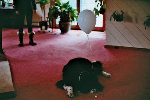 photographer photography elizabeth sarah hurowitz
