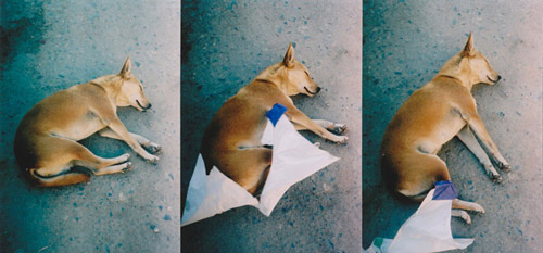 Ten Dogs by photographer Vincent Delbrouck