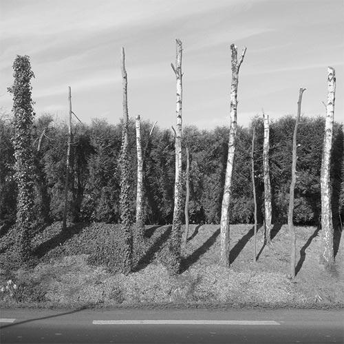 Photographer Sebastien Chou photography