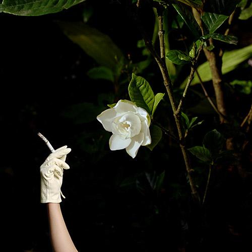 Photographer Diana Kingsley photography
