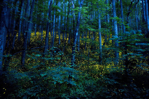 Photographer Katrien Vermeire fireflies godspeed photography