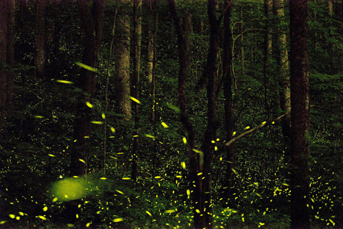Photographer Katrien Vermeire fireflies godspeed photography