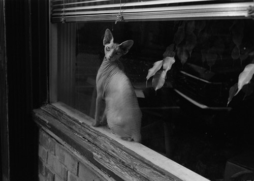 Photographer Mark Steinmetz photography