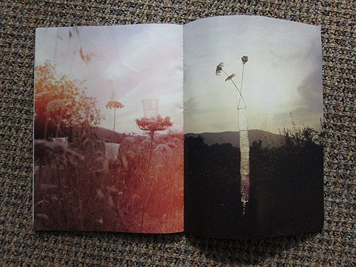 The Plant Journal photography magazine