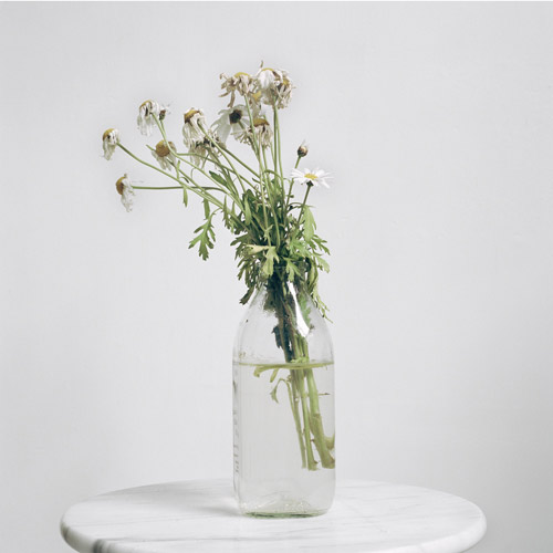 52 bunches of flowers i bought myself by photographer Julia Schauenburg