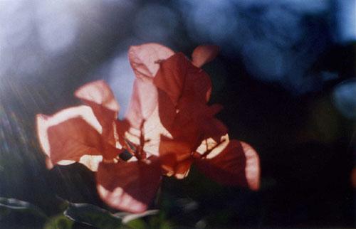 Photographer Rosanna Webster photography