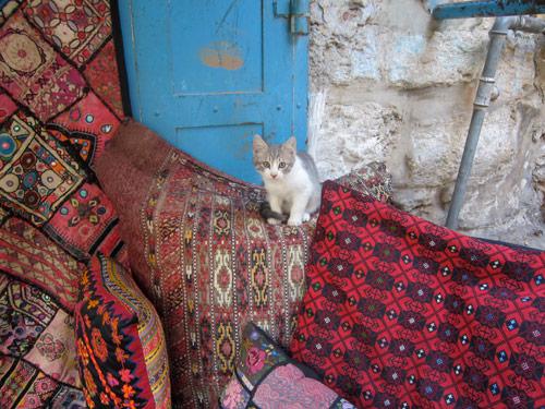 cats kinetis vibeisrael art design trip
