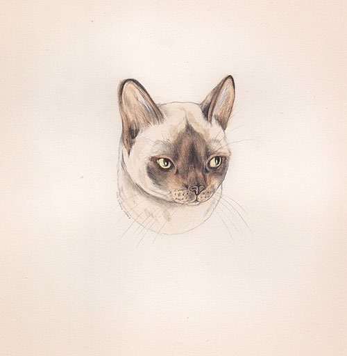 Drawings by artist illustrator Sarah McNeil
