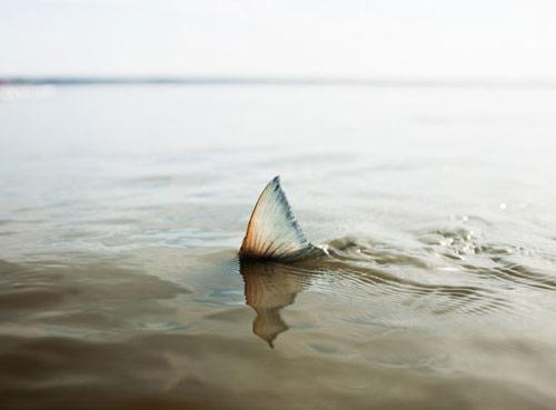Photographer Corey Arnold