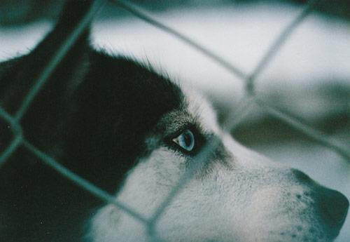 Photographer Nastya Jour photography